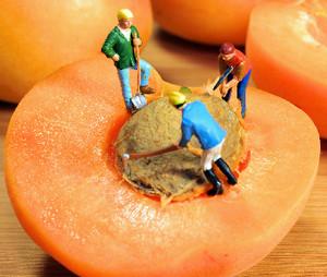польза абрикос