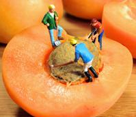 абрикос, польза абрикоса, абрикос польза